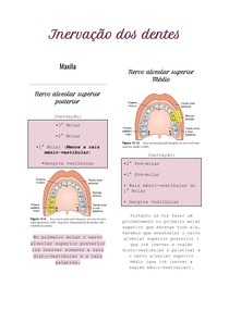 Inervação dos dentes