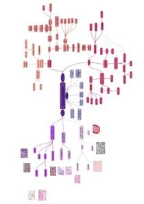 mapa tecido conjuntivo