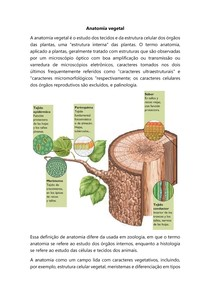 Anatomia vegetal