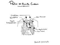 Pontos da Ausculta Cardíaca