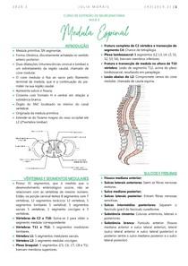 Medula Espinal - Neuroanatomia