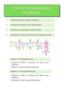 Resumo: Cadeia transportadora de életrons - Bioquímica
