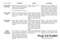 Epitélio humano Prof Gunaro
