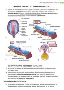 Embriologia - Sistema Esquelético