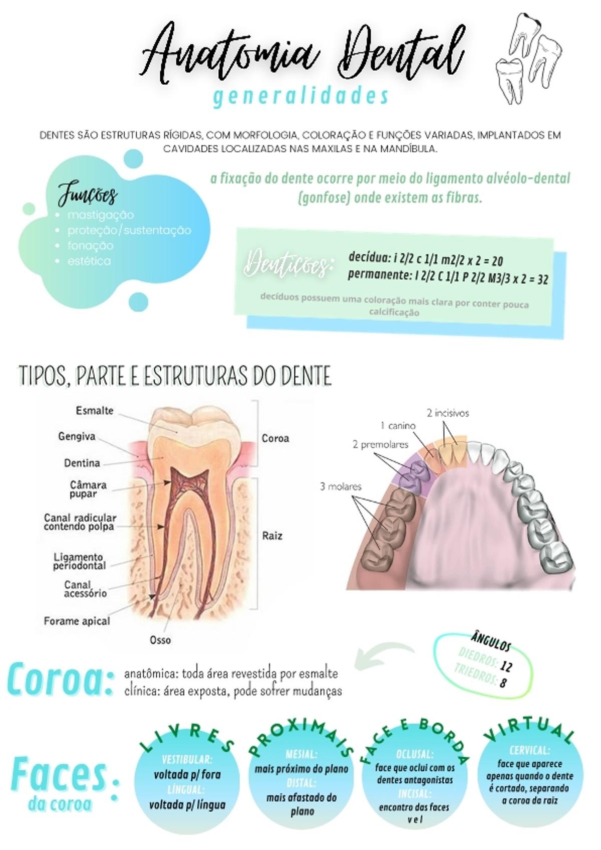 Pre-visualização do material Anatomia Dental - página 1