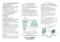 Cnidários (celenterados) prof. Gunaro