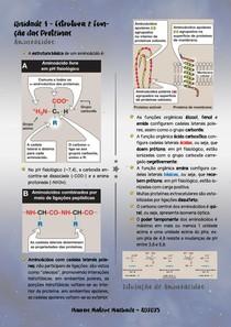 Mega Resumo Proteínas e Enzimas