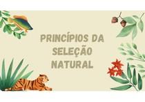 Princípios da seleção natural - Aula
