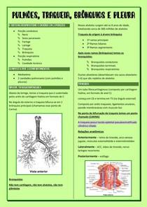 Anatomia dos pulmões, traqueia, brônquios e pleura