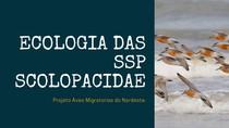 ECOLOGIA DAS SSP SCOLOPACIDAE