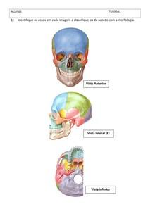 Atividade ossos