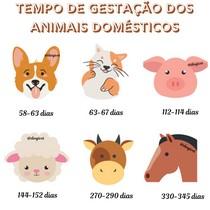Tempo de gestação dos animais domésticos