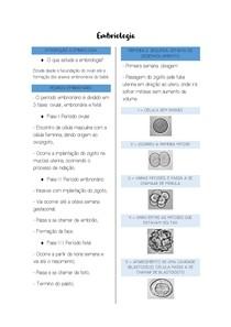 Períodos embrionários