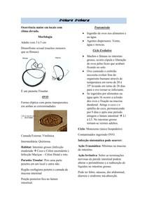 Resumo -Trichuris Trichiura