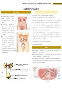 Resumo de Fisiologia - Sistema Urinário Parte 1 | por: @eduardareisnafisio