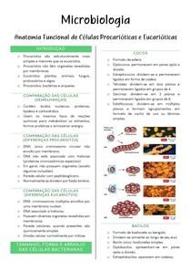 Anatomia Funcional de Células Procarióticas e Eucarióticas