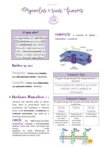 Organelas e suas funções - @Laravet.studies