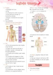 Sistema Nervoso - Neuroanatomia