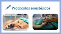 protocolos anestésicos
