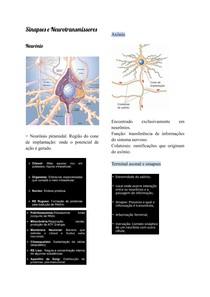 Sinapses e Neurotransmissores