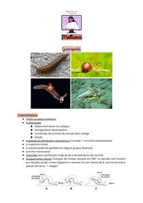 Mollusca - Gastropoda, Cephalopoda, Bivalvia e Scaphopoda