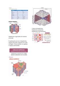Histologia dos órgãos anexos