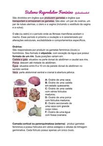 Sistema Reprodutor Feminino - Anatomia Veterinária