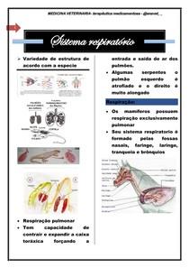 sistema respiratório - terapeutica