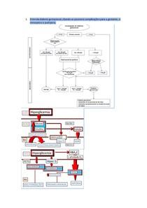 Saúde da mulher (SP4) Mecanismos do parto