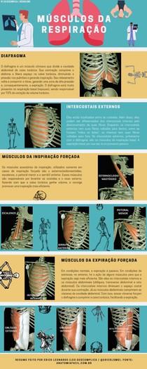 Músculos da Respiração