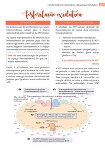 Fosforilação oxidativa - Bioquímica Metabólica