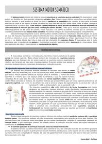 Sistema motor somático