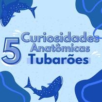 Curiosidades anatômicas de tubarões