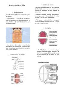 Anatomia dnetária