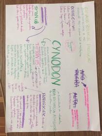 Mapa mental: Cynodon