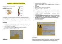 REUMATO - Lombalgia e cervicalgia