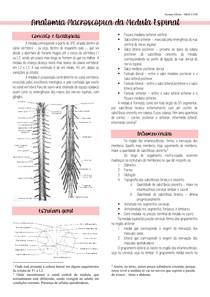 Anatomia macroscópica da medula espinal