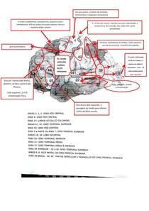 neurociencias np2 unip area broca wernicke