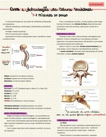 Ossos e Articulações da Coluna Vertebral e Músculos do Dorso