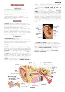 Aparelho auditivo - Anatomia, Fisiologia e Embriologia