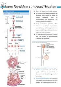 Funções Reprodutivas e Hormonais Masculinas - Resumo Guyton