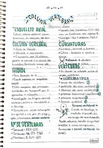 Coluna vertebral - Anatomia
