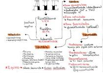 Mapa mental AINE, AIE e Anticolinesterasico VET