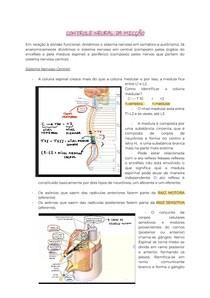 Controle Neural da micção