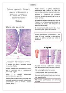Sistema reprodutor feminino, anexos embrionários e primeiras semanas de desenvolvimento