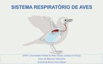 anatomia do sistema respiratório de aves e fisiologia