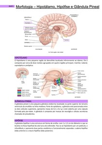 Morfologia - Hipotálamo, Hipófise e Glândula Pineal