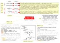 Hemostasia + coagulopatias