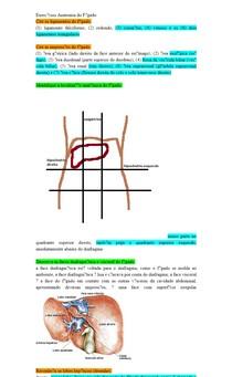 Exercícios Anatomia do Fígado
