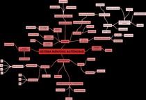 Sistema nervoso autônomo - mapa mental